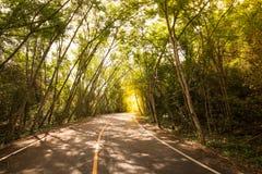 Δρόμος καμπυλών και σήραγγα λαστιχένιων δέντρων Στοκ εικόνες με δικαίωμα ελεύθερης χρήσης