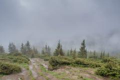 Δρόμος κοντά στο δάσος στα βουνά κατά τη διάρκεια της βρέχοντας ημέρας Στοκ Εικόνες