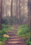 Δρόμος μέσω ενός δάσους στοκ φωτογραφίες