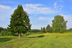 Δρόμος μέσω ενός λιβαδιού και μιας μυθικής ερυθρελάτης Στοκ εικόνες με δικαίωμα ελεύθερης χρήσης