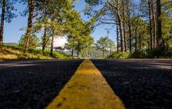 Δρόμος μέσω του δάσους Στοκ φωτογραφίες με δικαίωμα ελεύθερης χρήσης