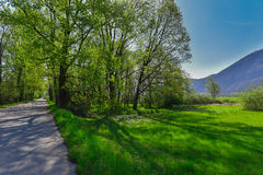 Δρόμος μέσω του δάσους Στοκ Φωτογραφία