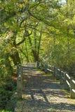 Δρόμος μέσω του δάσους Στοκ Φωτογραφίες