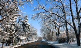 Δρόμος μέσω του δάσους στοκ φωτογραφία με δικαίωμα ελεύθερης χρήσης