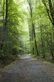 Δρόμος μέσω του δάσους Στοκ εικόνα με δικαίωμα ελεύθερης χρήσης