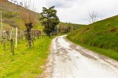 Δρόμος μέσω του ειρηνικού πράσινου καλλιεργήσιμου εδάφους στους κυλώντας λόφους στοκ εικόνα με δικαίωμα ελεύθερης χρήσης