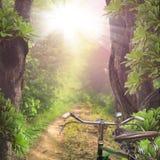 Δρόμος μέσω των δασών Στοκ εικόνα με δικαίωμα ελεύθερης χρήσης