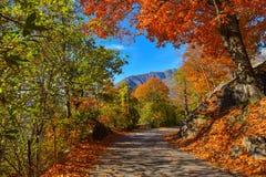 Δρόμος μέσω των δασών Στοκ Εικόνες