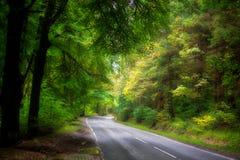 Δρόμος μέσω των δέντρων Στοκ εικόνα με δικαίωμα ελεύθερης χρήσης