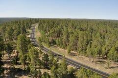Δρόμος μεταξύ των δέντρων Στοκ Φωτογραφίες