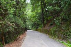 Δρόμος μεταξύ των δέντρων Στοκ Εικόνα