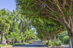 Δρόμος μεταξύ των πράσινων δέντρων στο πάρκο παραλιών antalya Τουρκία Στοκ εικόνα με δικαίωμα ελεύθερης χρήσης