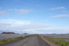 Δρόμος μεταξύ των lupines στην Ισλανδία Στοκ εικόνες με δικαίωμα ελεύθερης χρήσης