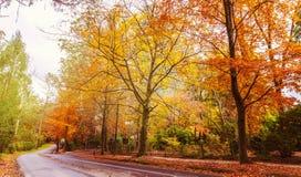 Δρόμος με πολλ'ες στροφές με τα χρυσά δέντρα το φθινόπωρο Στοκ εικόνα με δικαίωμα ελεύθερης χρήσης