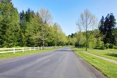 Δρόμος με τα άσπρα δέντρα φραγών και άνοιξη. Στοκ Φωτογραφίες