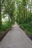 Δρόμος με τα δέντρα Στοκ Φωτογραφίες