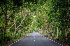 Δρόμος με τα δέντρα κατά μήκος του τρόπου στοκ φωτογραφία με δικαίωμα ελεύθερης χρήσης