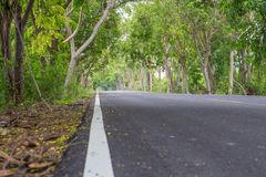 Δρόμος με τα δέντρα κατά μήκος του τρόπου στοκ εικόνες