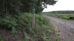 Δρόμος με τα κομμάτια στο δάσος αυλακώματος Cannock, UK απόθεμα βίντεο