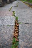 Δρόμος πετρών Cobbled που παρουσιάζεται σε μια μικρή γωνία στην Πετρούπολη Στοκ Εικόνες