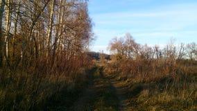 Δρόμος που εισβάλλεται παλαιός με τα περάσματα χλόης με τη φύτευση λευκών στοκ φωτογραφία με δικαίωμα ελεύθερης χρήσης