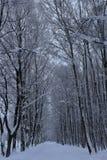 Δρόμος που καλύπτεται χειμερινός στο χιόνι μέσω ενός δάσους στοκ φωτογραφίες