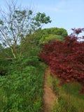 Δρόμος που περιβάλλεται μυστικός από τα δέντρα στοκ φωτογραφία