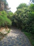 Δρόμος που περιβάλλεται μυστικός από τα δέντρα στοκ φωτογραφίες με δικαίωμα ελεύθερης χρήσης