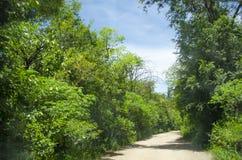 Δρόμος που περιβάλλεται από την πράσινη βλάστηση Στοκ εικόνες με δικαίωμα ελεύθερης χρήσης