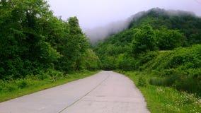 Δρόμος που περνά από το δάσος στοκ εικόνες
