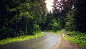 Δρόμος που πλαισιώνεται από τα ξύλα Στοκ Φωτογραφία