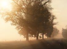 Δρόμος πρωινού Στοκ Εικόνες