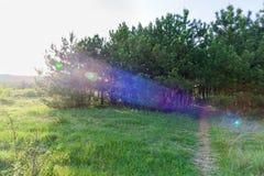 Δρόμος σε ένα δάσος πεύκων Στοκ φωτογραφία με δικαίωμα ελεύθερης χρήσης