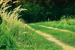 Δρόμος σε ένα δάσος Στοκ Εικόνες