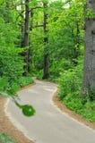 Δρόμος σε ένα δάσος Στοκ Φωτογραφίες