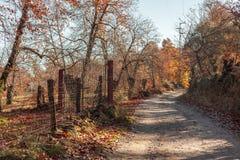 Δρόμος σε ένα δασικό σύνολο των πορτοκαλιών φύλλων φθινοπωρινό τοπίο Huel Στοκ φωτογραφία με δικαίωμα ελεύθερης χρήσης
