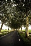 Δρόμος σηράγγων δέντρων Στοκ Φωτογραφίες
