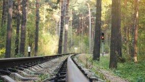 Δρόμος σιδηροδρόμων στο βαθύ δάσος πεύκων σε σε αργή κίνηση 1920x1080 φιλμ μικρού μήκους