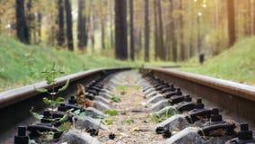 Δρόμος σιδηροδρόμων στο βαθύ πεύκο δασικό 3840x2160 απόθεμα βίντεο