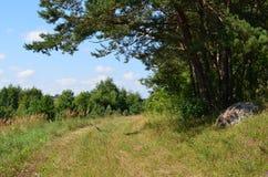 Δρόμος στην άκρη του δάσους Στοκ φωτογραφία με δικαίωμα ελεύθερης χρήσης