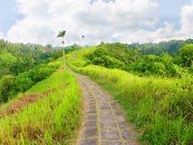 Δρόμος στην κορυφή του λόφου στην πράσινη ζούγκλα του Μπαλί, ubud Στοκ Φωτογραφία