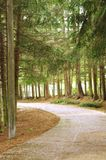 Δρόμος στη μέση του δάσους στοκ φωτογραφία με δικαίωμα ελεύθερης χρήσης