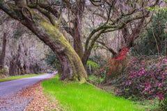 Δρόμος στη νότια Καρολίνα φυτειών Magnolia Στοκ Φωτογραφίες