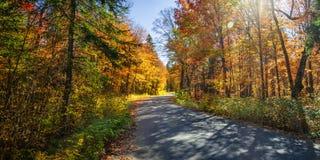 Δρόμος στο δάσος πτώσης Στοκ φωτογραφίες με δικαίωμα ελεύθερης χρήσης