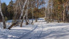 Δρόμος στο δάσος Στοκ εικόνα με δικαίωμα ελεύθερης χρήσης