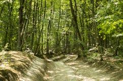 Δρόμος στο δάσος Στοκ φωτογραφία με δικαίωμα ελεύθερης χρήσης