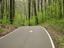 Δρόμος στο δάσος στοκ εικόνες με δικαίωμα ελεύθερης χρήσης