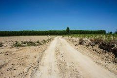 Δρόμος στο αγρόκτημα μανιόκων Στοκ Εικόνες
