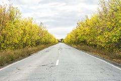 Δρόμος στο δασικό τοπίο φθινοπώρου στοκ φωτογραφία