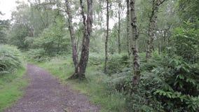 Δρόμος στο δάσος αυλακώματος Cannock, UK φιλμ μικρού μήκους
